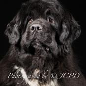 newfie adult